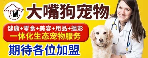 大嘴狗宠物店 有实力的品牌项目