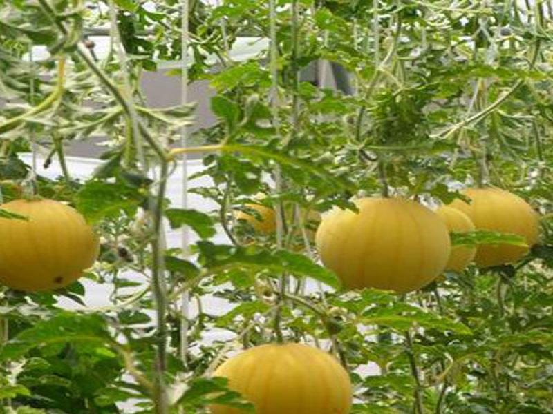 中农共信有机瓜菜工
