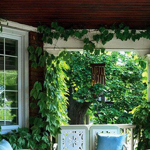 入户花园吊顶_入户花园吊顶土拨鼠装修装饰网