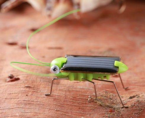 蝗虫内部身体结构