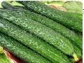 洋香瓜蔬菜