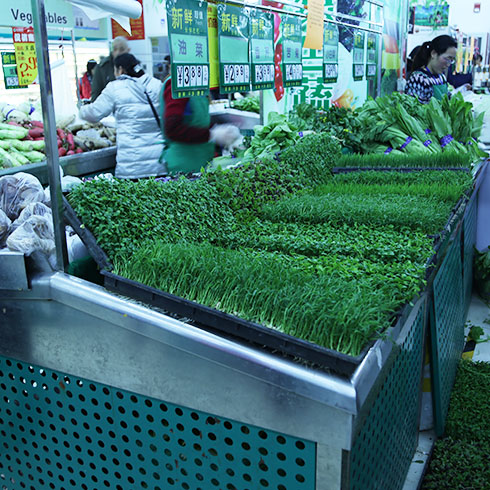 爱心农场芽苗菜产品-豆芽菜