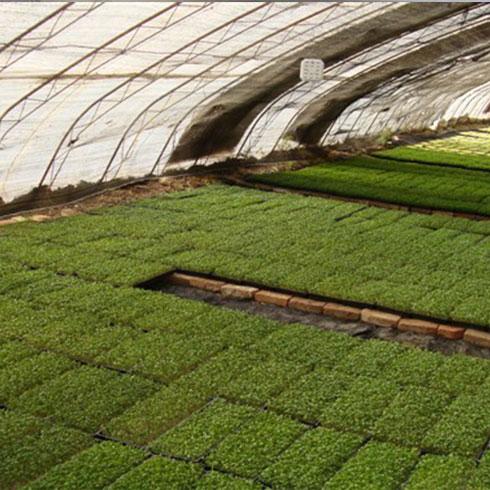 爱心农场芽苗菜产品-黑豆芽