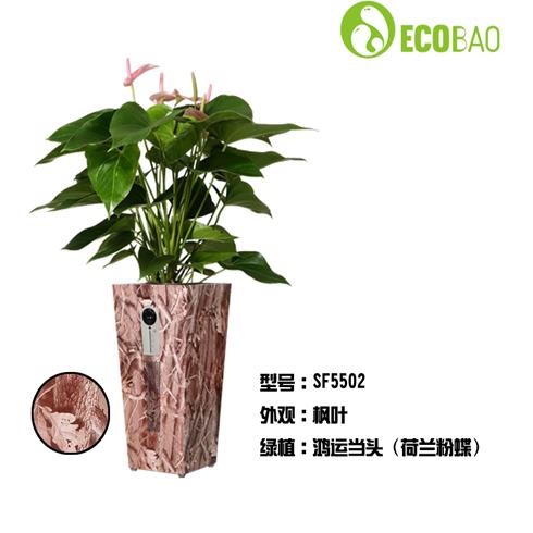 生泰宝5501