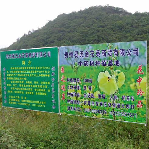 易金香金花葵种植基地