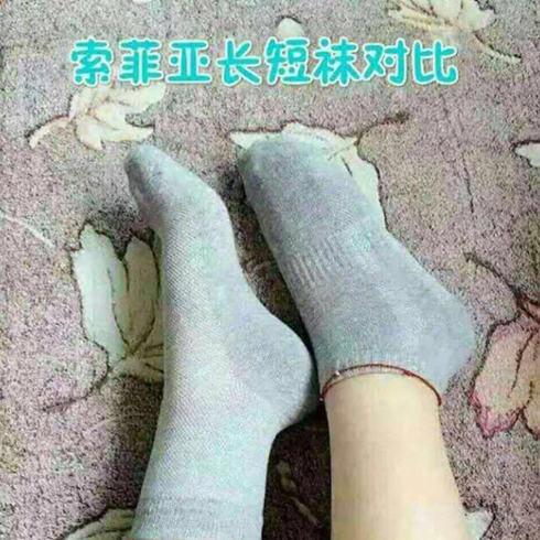索菲亚长短袜
