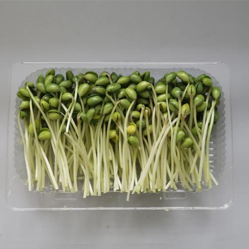 菜立方芽苗菜-黑豆苗
