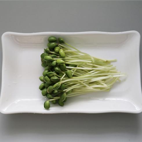 菜立方芽苗菜-黄豆苗