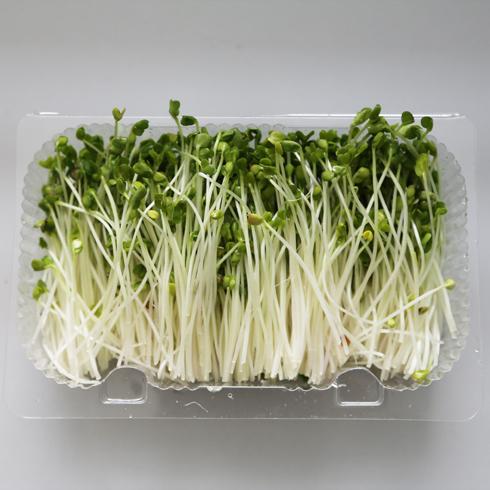 菜立方芽苗菜-萝卜苗