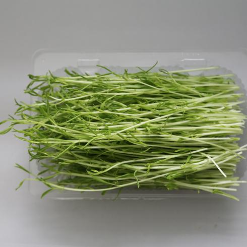 菜立方芽苗菜-松柳苗