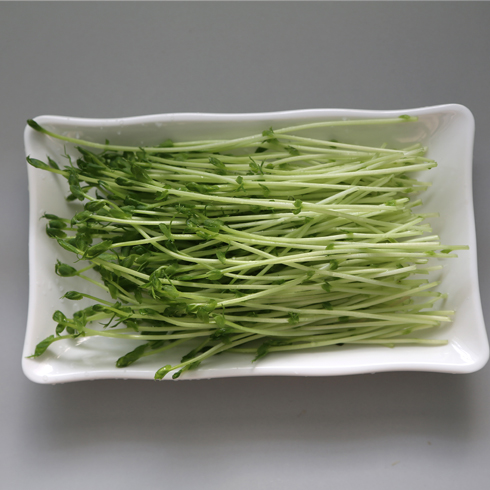 菜立方芽苗菜-豌豆苗