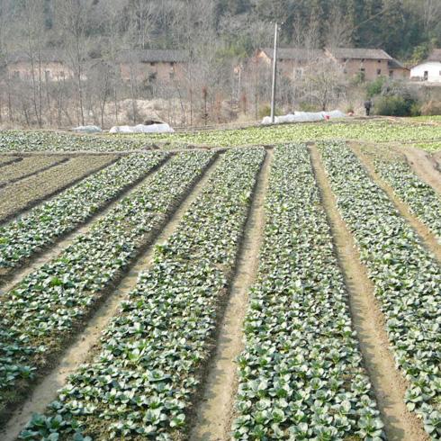 都市菜园蔬菜种植基地