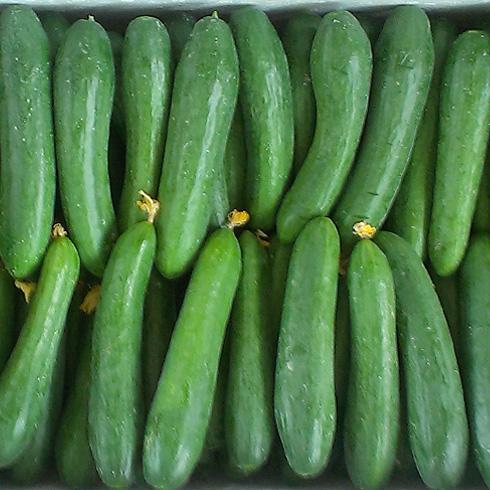 都市菜园--小青瓜