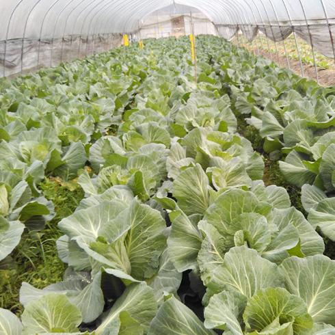 都市菜园--蔬菜基地