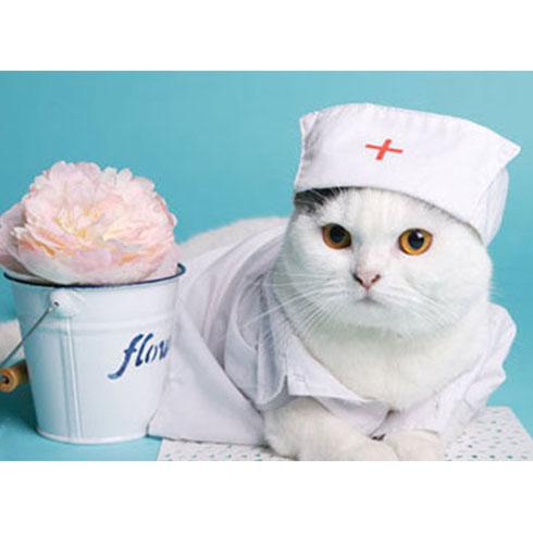 大嘴狗宠物店-护士小猫咪