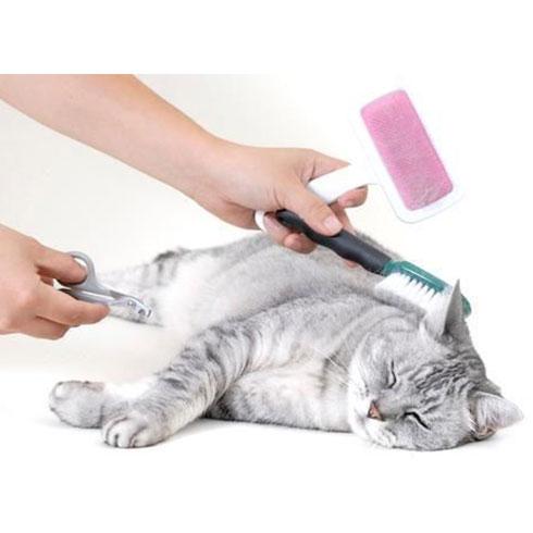 大嘴狗宠物店-修理猫毛
